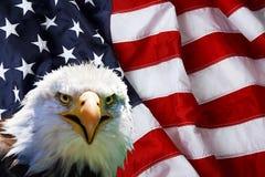 Nordamerikanischer Weißkopfseeadler auf amerikanischer Flagge Lizenzfreie Stockfotografie