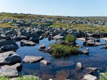 Nordblumen unter Wasser Stockfotografie