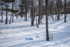 Nordbo Ski Trails i en skog arkivbild