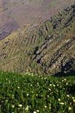 Norden av den Lanzarote ön, Spanien Arkivbilder
