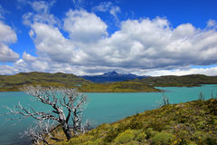 Nordenskjold lake, Torres Del Paine National Park, Patagonia, Chile. Southamerica Stock Photography