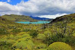 Nordenskjold lake, Torres Del Paine National Park, Patagonia, Chile. Southamerica Stock Images