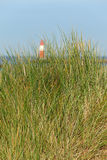 Nordic Coast Landscape. Tuft of grass on the dunes with the sea and a lighthouse at the background Stock Images