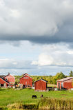 Nordic landscape. Nordic, finnish landscape with cottages Stock Image
