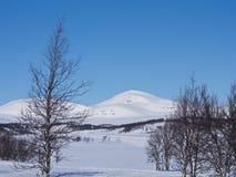 Nordic mountain. Skarsmountain Härjedalen Sweden a sunny wintwrday Royalty Free Stock Photography