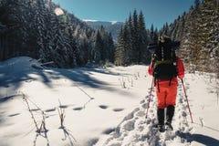 Nordic que anda no inverno Fotografia de Stock Royalty Free