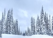 Nordic ski near Kelowna at Big White Ski Resort on a snowy day. Cross Country skiing near Kelowna. British Columbia. Canada Royalty Free Stock Photography
