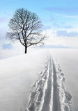 Nordic ski track and tree Stock Photos