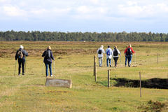 Nordic walkers at Falsterbo, South Sweden. A group of walkers walks over Skanors Ljung (heath of Skanor) at Swedish Falsterbo. Skanörs Ljung Nature Reserve is Royalty Free Stock Images