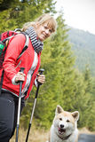 Nordic Walking with dog in mountains. Nordic Walking in Autumn mountains with purebred Akita Inu dog Stock Photography