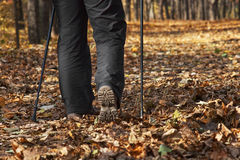 Nordic walking in fall Stock Image