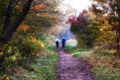 Nordic walking in the forest Stock Photos