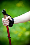 Nordic walking in nature. Nordic walking in summer nature. Woman exercise Stock Image