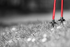 Nordic walking. Red sticks on grass in park Royalty Free Stock Photo