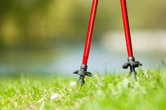 Nordic walking. Red sticks on grass in park Royalty Free Stock Image