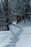 Nordic walking in a snow pathway. A pathway in the snow Stock Photos