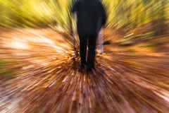 Nordic walking sport run walk motion blur outdoor person legs fo Stock Photography