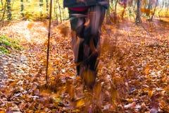 Nordic walking sport run walk motion blur outdoor person legs fo Stock Image