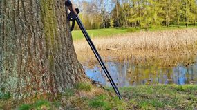 Nordic walking on the spring park Royalty Free Stock Images