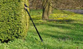 Nordic walking on the spring park Stock Photos