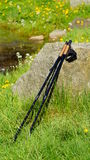 Nordic walking on the spring park Royalty Free Stock Photos