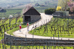 Nordic walking among the vineyards of the Wachau valley. Lower Austria. Stock Photos