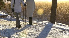Winter sport for all ages - nordic walking Active people hiking in snowy forest stock footage