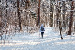 Nordic walking. Woman in a white jacket with a backpack hiking in a cold forest. Scenic beautiful landscape with snow Royalty Free Stock Photography