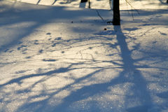 Nordic winter. Atmospheric nordic forest scene in the winter with rabbit tracks, snow and shadows stock photo