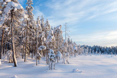 Nordic winter day Stock Photo