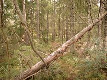 Nordic woodland Stock Image