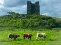 Nordirland - Winterfell Arkivbilder