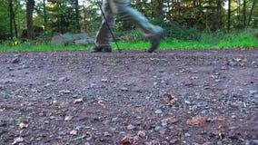 Nordisches Gehen Waldweg an KOHMak Auf der Straße gibt es einen Wanderer stock video footage