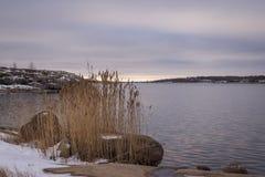 Nordisk kustlinje Royaltyfria Bilder