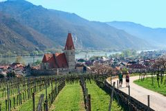 Nordiska fotgängare bland vingårdarna av den Wachau dalen Lägre Österrike Arkivfoton