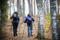 Nordiskt gå Pys och ung kvinna tillbaka sikt Björkskog royaltyfri bild