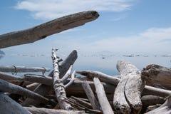 Nordküstenmeer von Ochotsk Stockfotografie