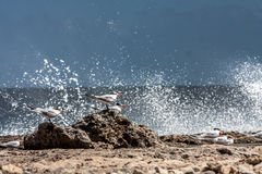 Nordküstenwellen und -seeschwalben Playa Canoa Lizenzfreies Stockbild