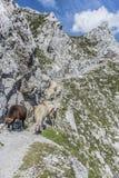 Nordkette mountain in Tyrol, Innsbruck, Austria. Royalty Free Stock Photo