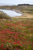 Nordlandschaft mit roten Beeren Stockfotografie