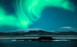 Nordlichtaurora borealis über Bäumen Stockbilder