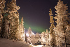 Nordlichter über dem weißen Wald Stockfotos