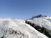 Nordlig Angletarn pik i snön Arkivfoto