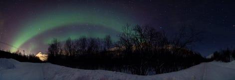 nordlig over vinter för morgonrodnadskoglampa Royaltyfria Bilder