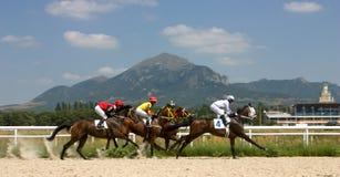 nordlig pyatigorsk tävlings- russia för caucasus hippodromehäst Arkivfoton