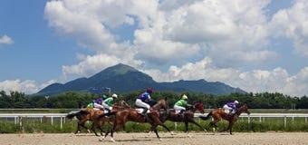 nordlig pyatigorsk tävlings- russia för caucasus hippodromehäst Fotografering för Bildbyråer