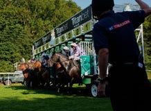 nordlig pyatigorsk tävlings- russia för caucasus hippodromehäst Starten Royaltyfria Foton