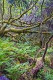 Nordlig regnskog Arkivfoton