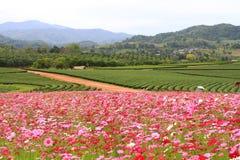 Nordlig Thailand Boonrod lantgård royaltyfri fotografi