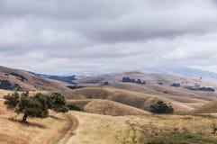 Nordliga Kalifornien landskap, vinterdag, Garin Regional Park, Hayward, Kalifornien, USA fotografering för bildbyråer